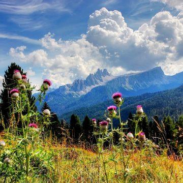 Croda Da Lago, Tofane, Dolomites, NatureCroda Da Lago Tofane Dolomites Nature
