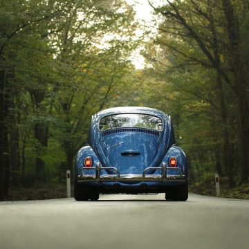 Vw Beetle Car Classic Car Forest Outdoors Road
