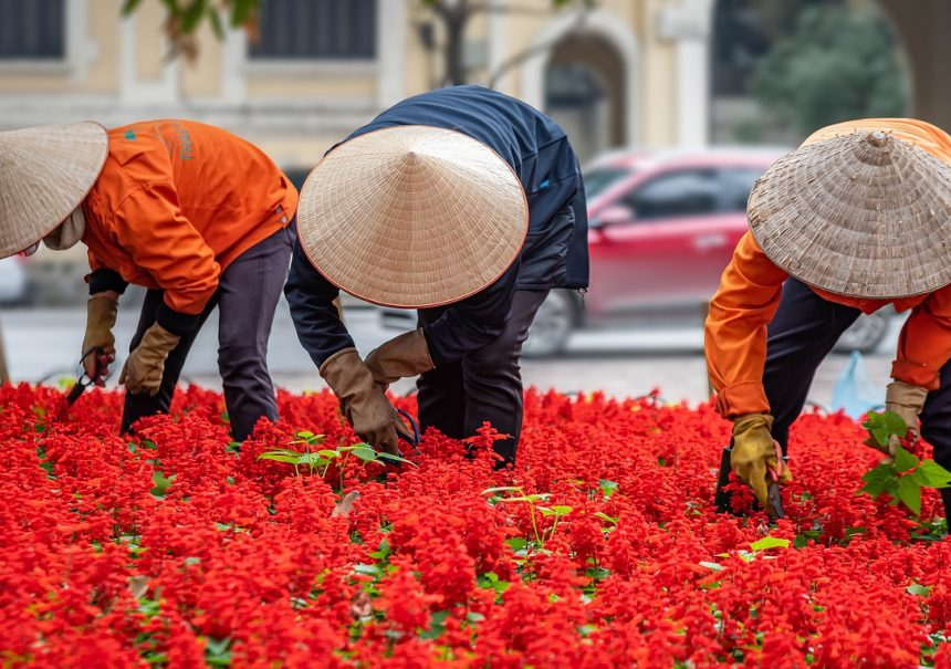 Gardening People Workers Vietnam Hanoi Asia Urban